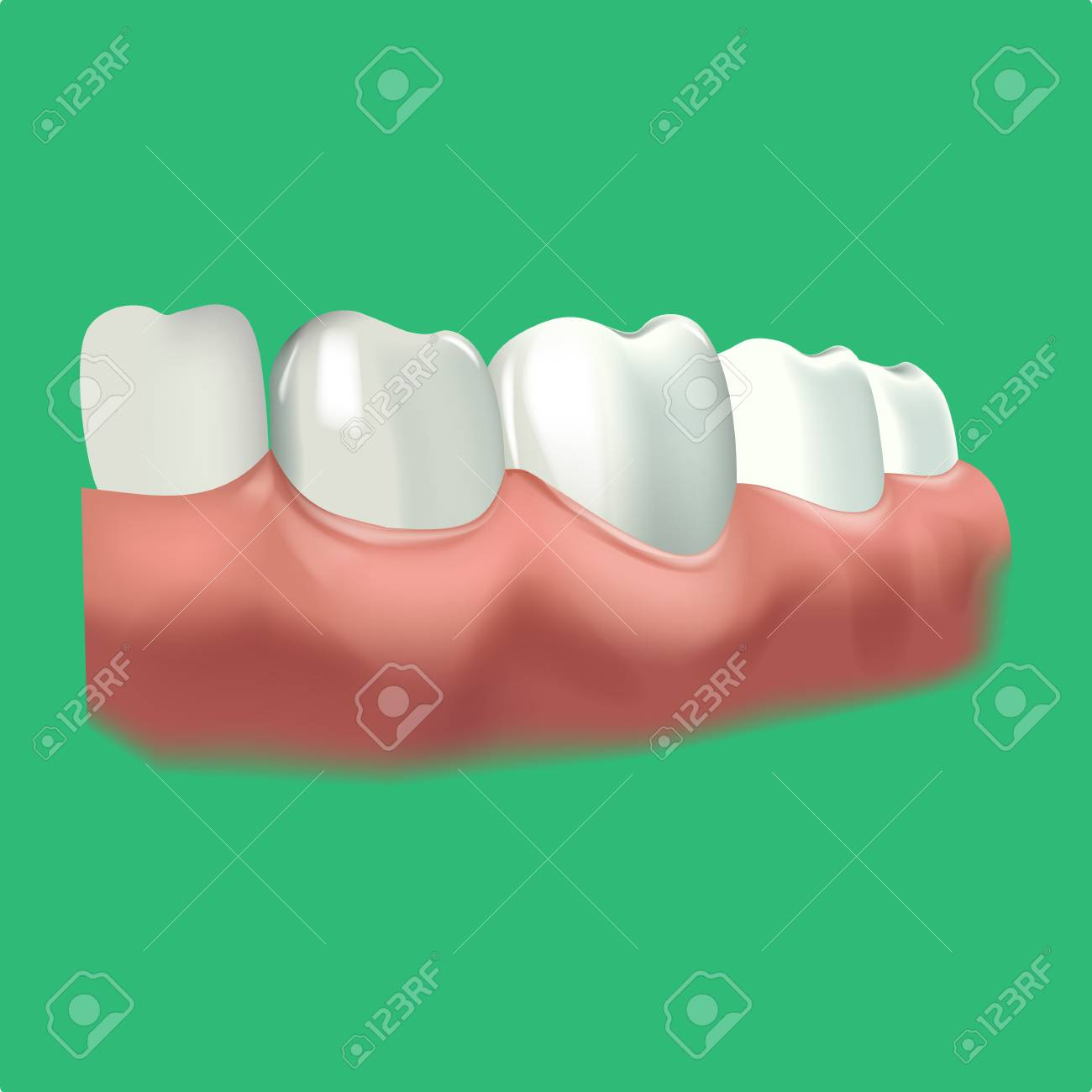 Menschliche Kauflächen Und Zahn. Vector Illustration Der ...