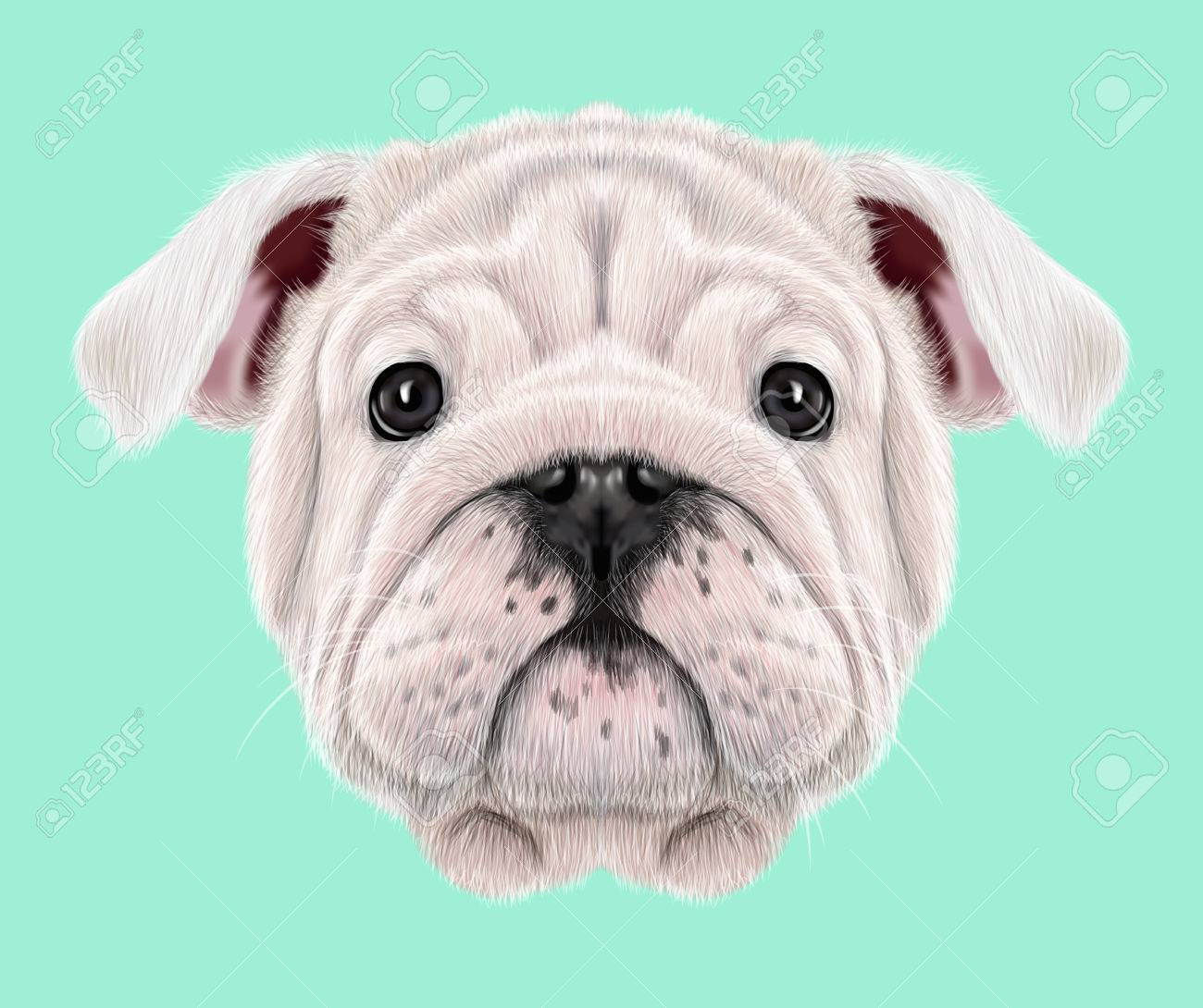 Illustrated Portrait Of English Bulldog Puppy Cute Fluffy White Stock Photo Picture And Royalty Free Image Image 75882510