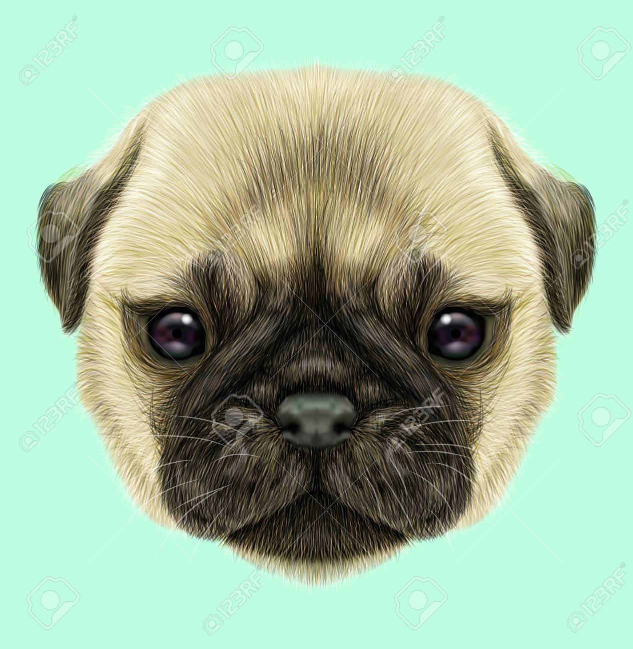 Illustrated Portrait Of Pug Puppy Cute Fluffy Fawn Face Of Domestic Stock Photo Picture And Royalty Free Image Image 75937024