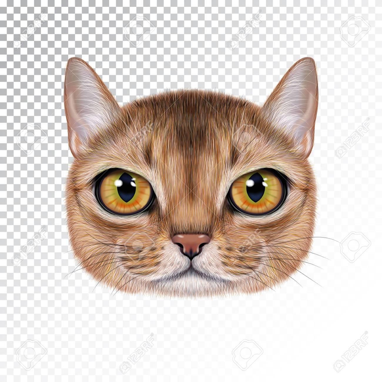 Portrait D Illustration Vectorielle De Chat Abyssin Visage Mignon Réaliste De Dessin Animé De Chat Couleur Sable Pour L Impression Sur Un Oreiller