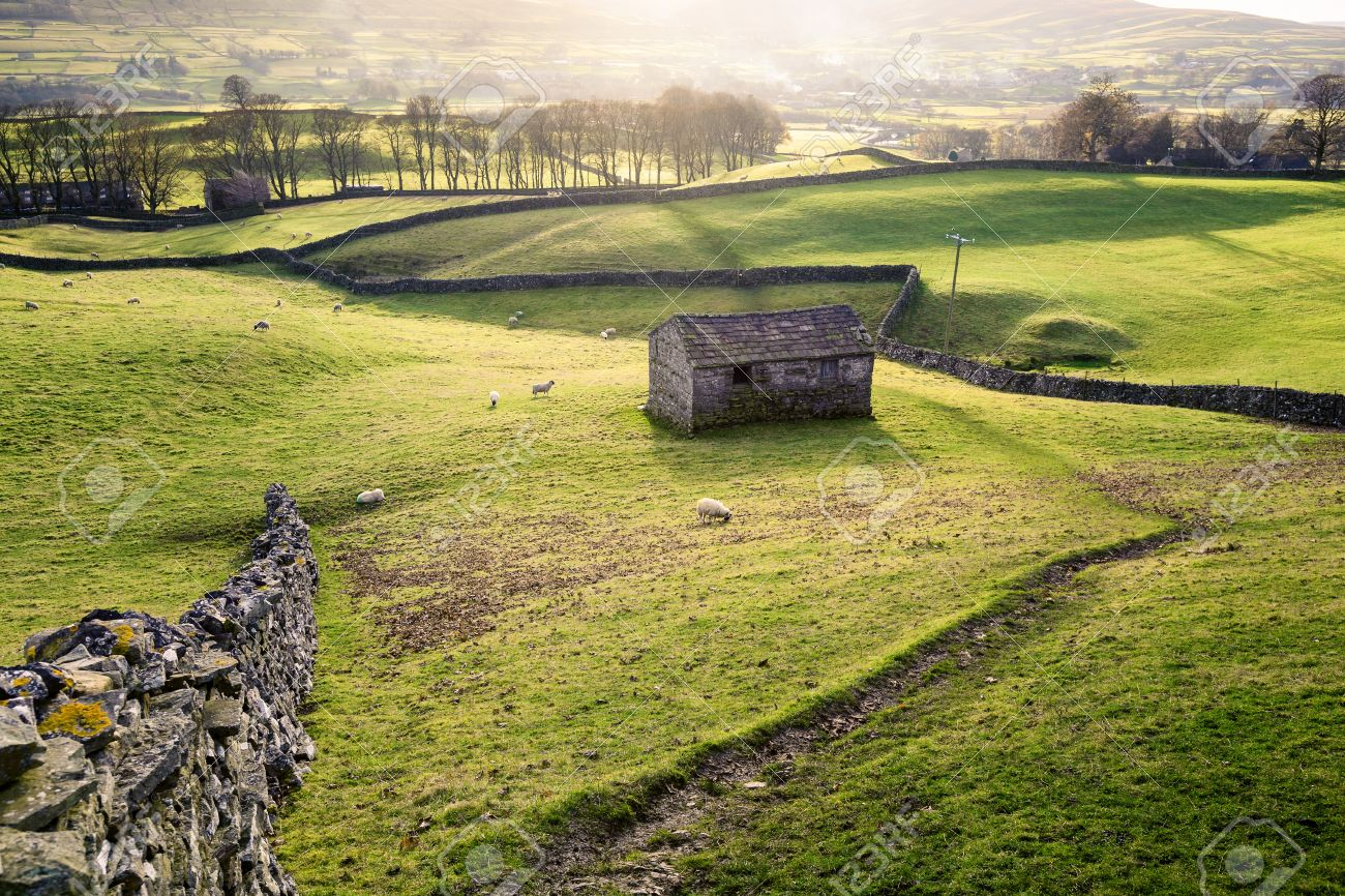 A Field With Sheep Dry Stone Wall And Traditional Barn Nears Hawes In