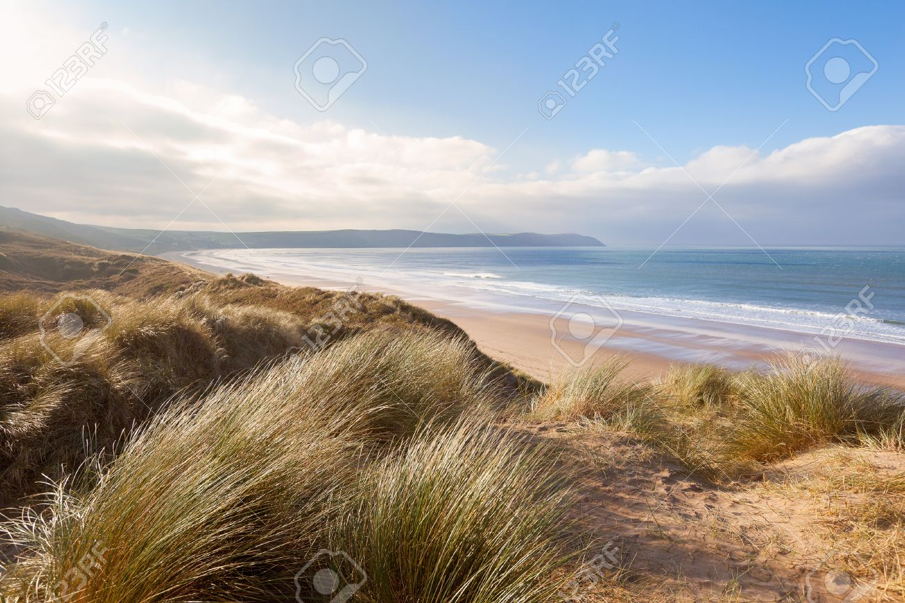 Windswept grass on the sand dunes above Woolacombe beach in North Devon, England - 36806091