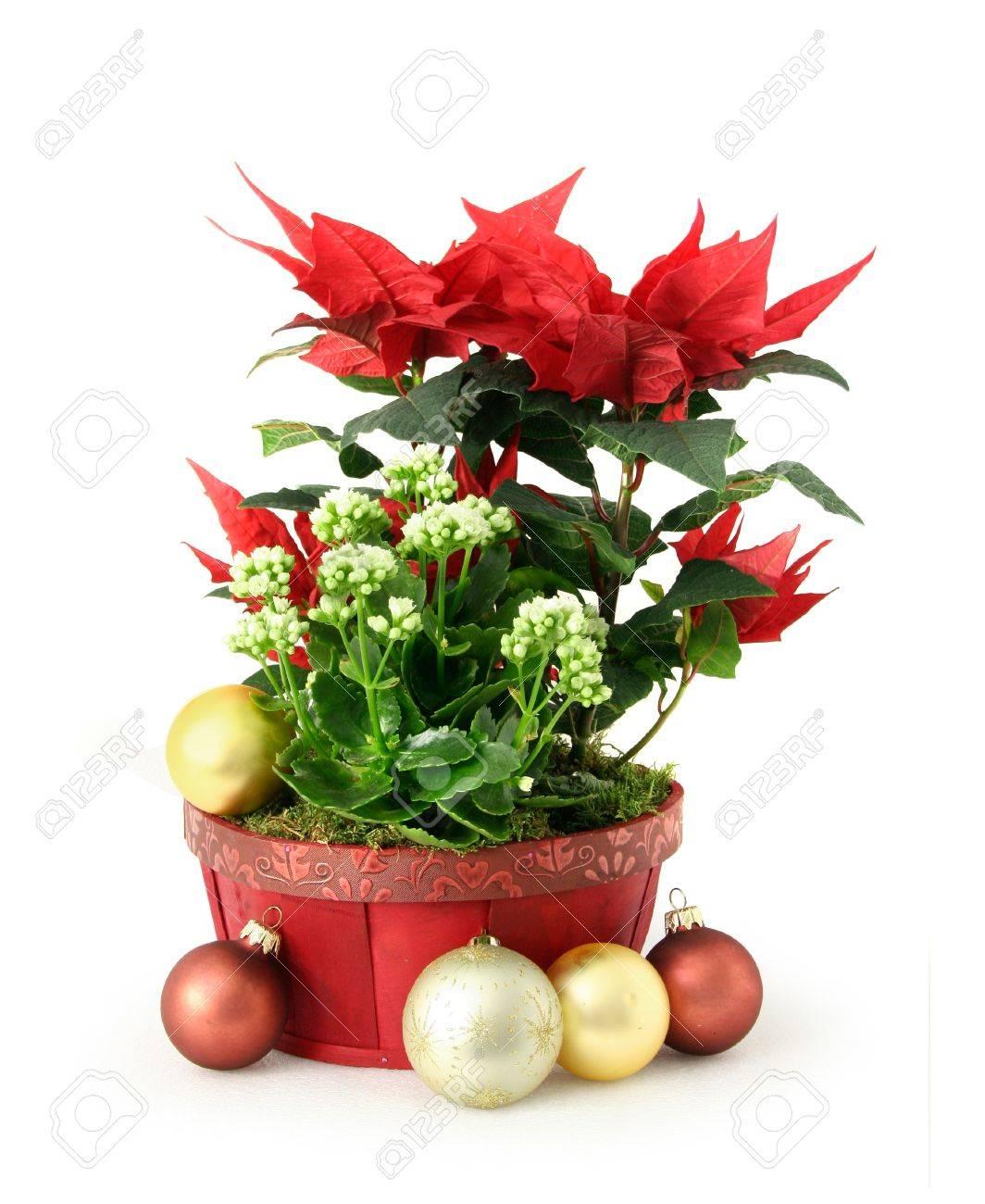 Red Blanco Navidad Decoración Arreglo Floral En Olla