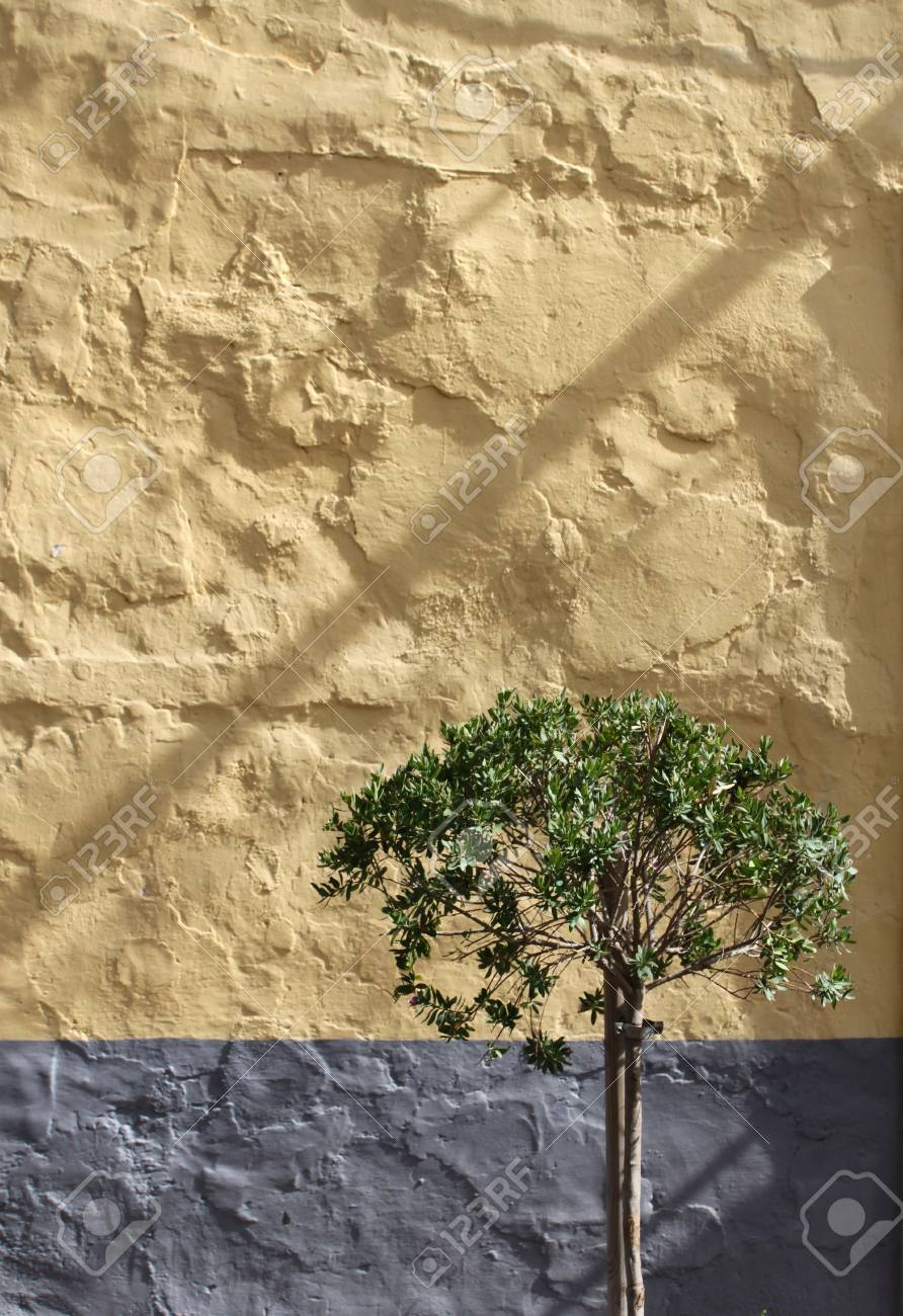 Olive tree against yellow grey rough stone wall background Stock Photo - 11038270