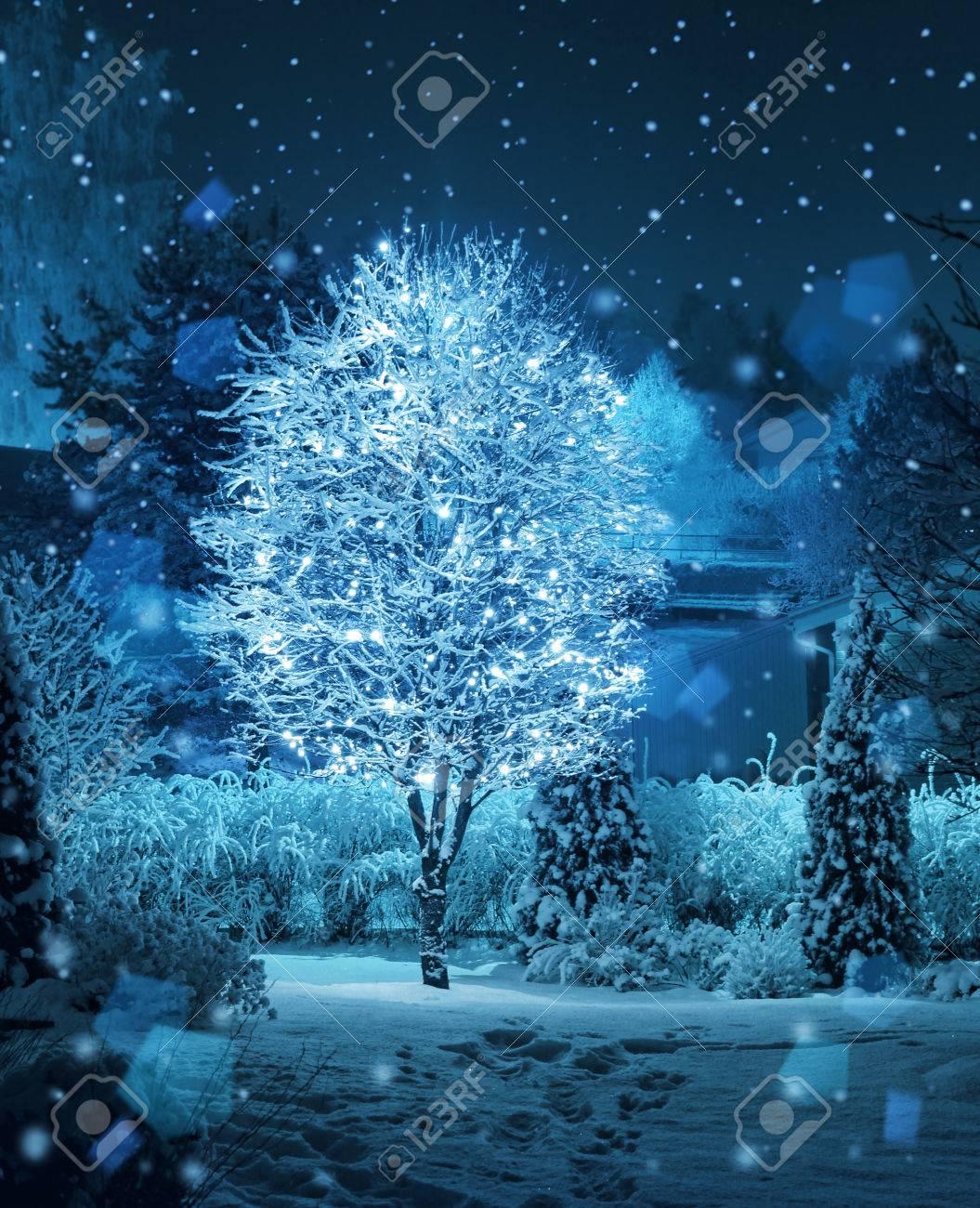 Illuminated Tree Decoration In Christmas Fantasy Winter Garden ...