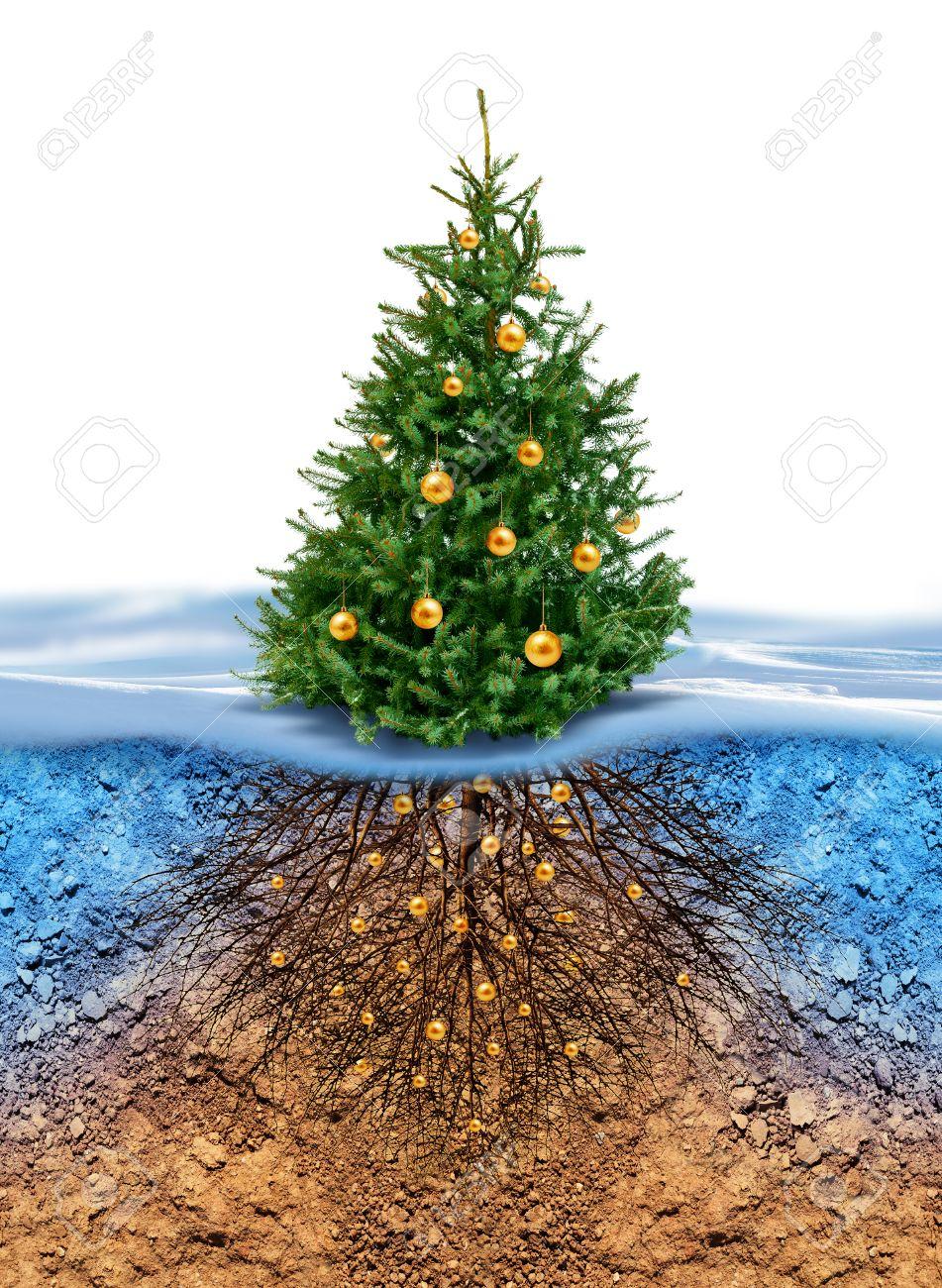 Vert Sapin De Noël Avec Des Boules D'or, Les Racines Dans Le Sol
