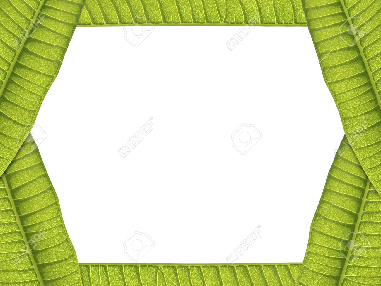 green leaves card border on white background , real leaves Stock Photo - 14601840