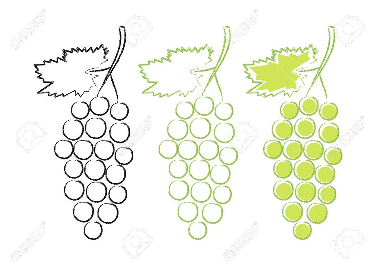 Grape icons on white background Stock Vector - 13670332