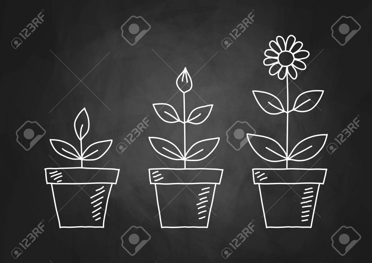 Drawing of flowers on blackboard - 18081605