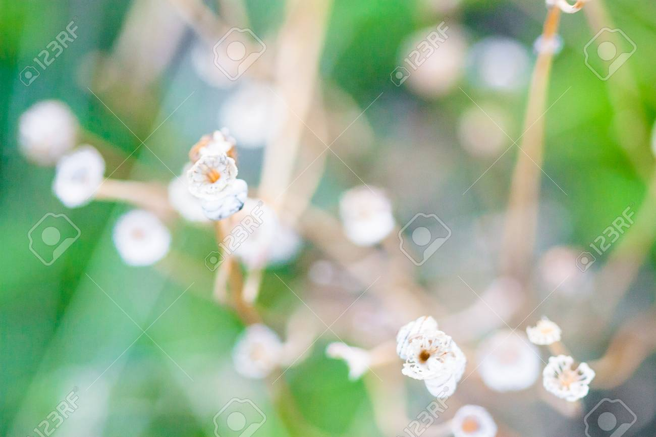 Small white flowers on a bent stem white colored flowers on stock small white flowers on a bent stem white colored flowers on a background of mightylinksfo