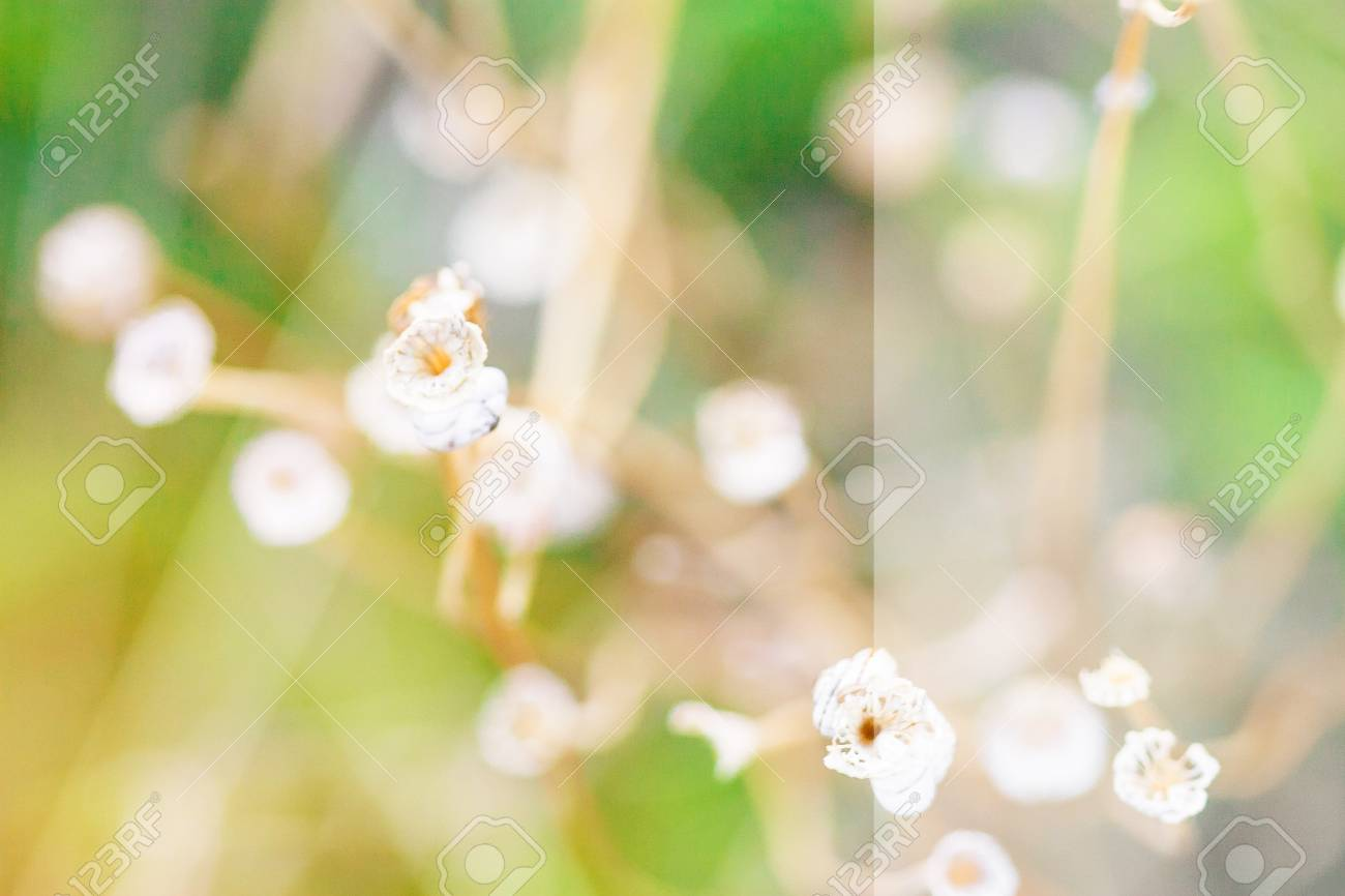 White transparent background for text small white flowers on stock photo white transparent background for text small white flowers on a bent stem white flowers on background of green grass mightylinksfo