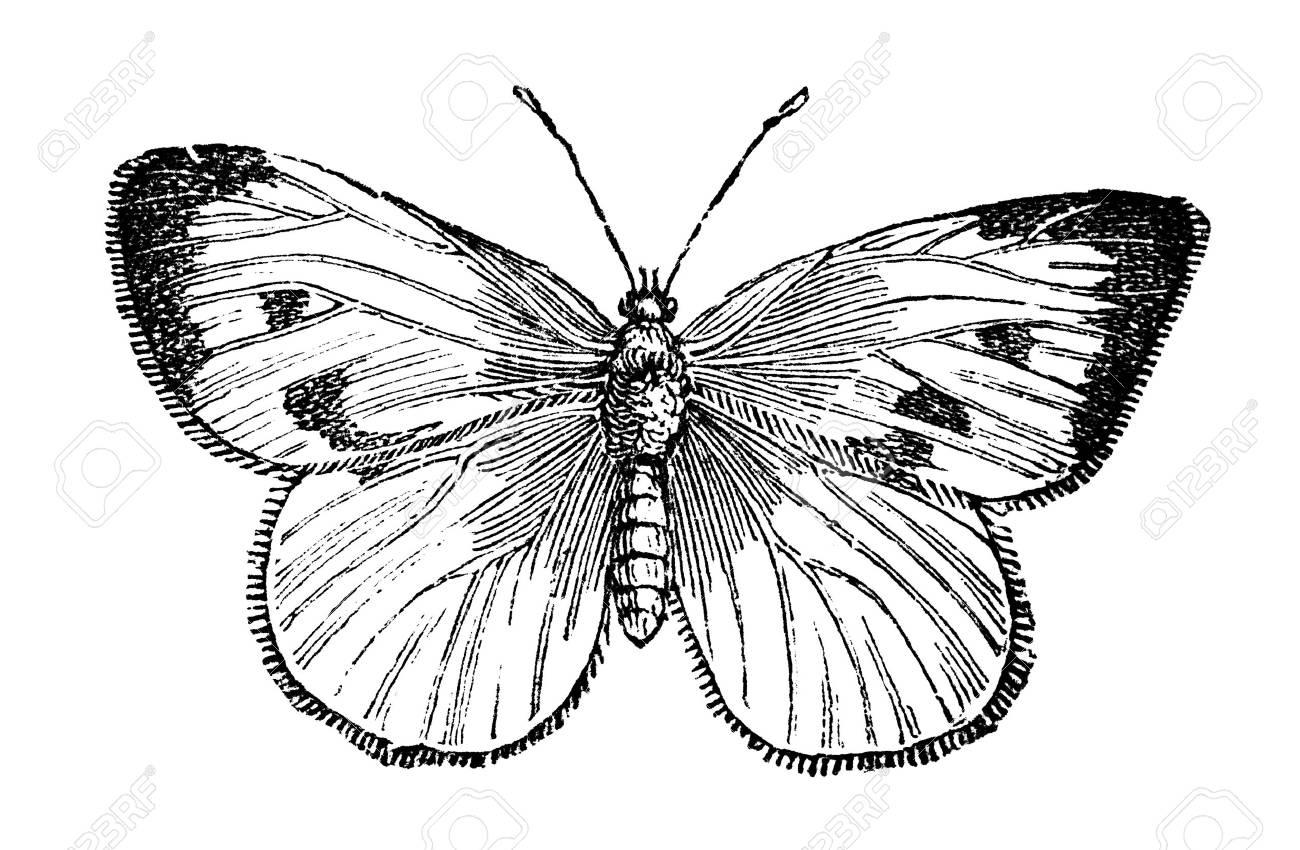 Encyclop/édie des papillons