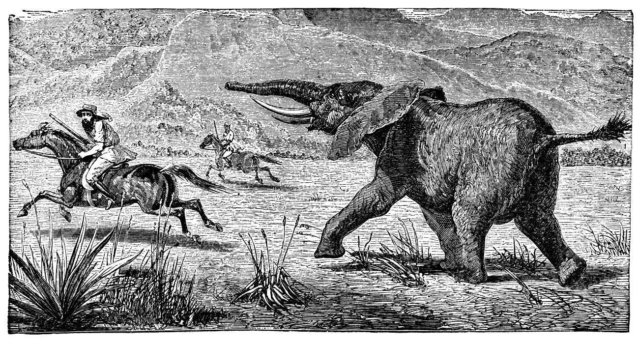 Gravure Victorienne D'un éléphant Débandade Banque D'Images Et ...