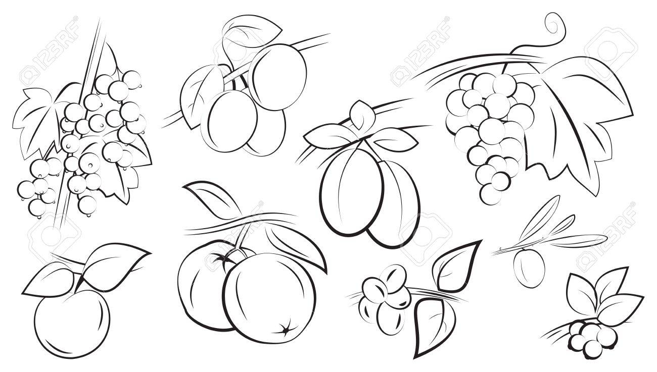 fruits and berries on branches with leaves set isolated on white vector illustration Stock Vector - 15283727