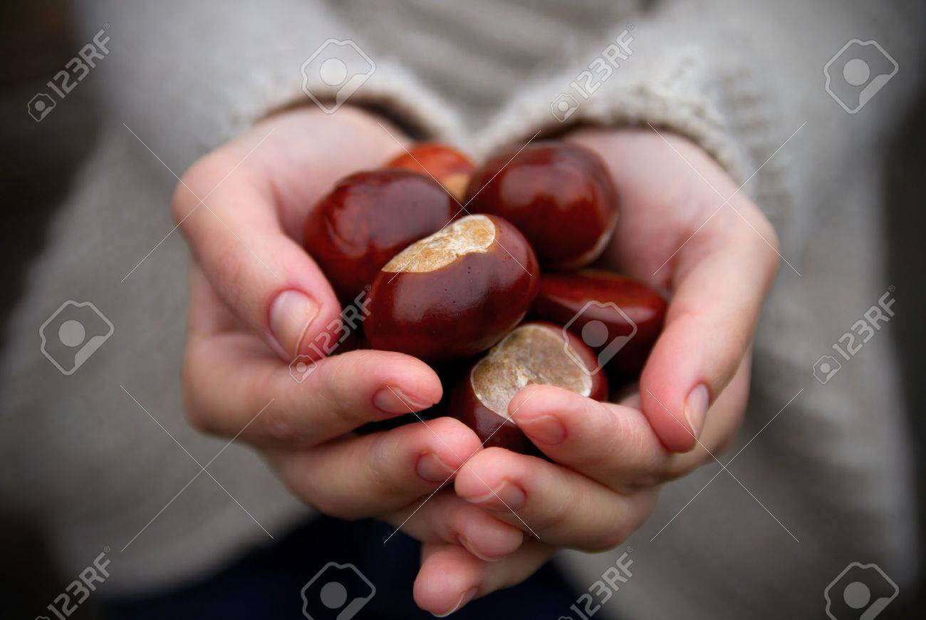 Handful of conkers with slight added vignette. Stock Photo - 7972971
