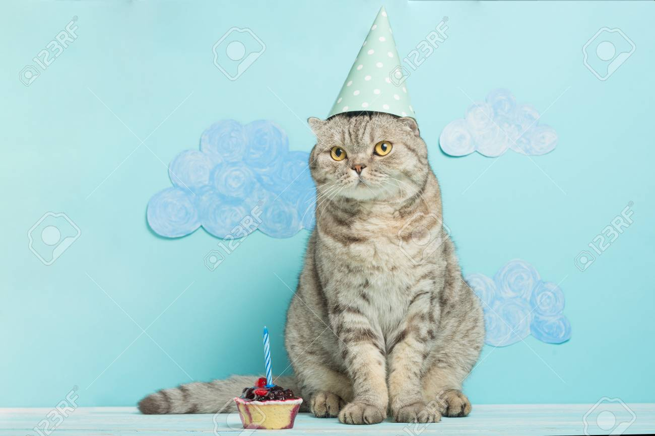 Birthday Greetings From A Cat Standard Bild