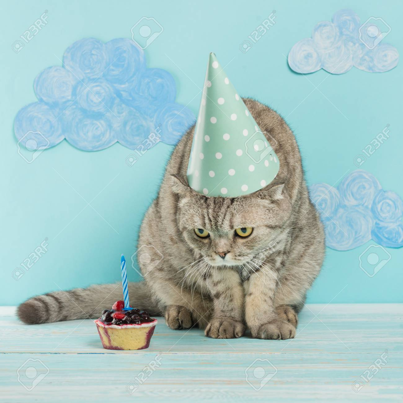 Birthday Greetings From A Cat Stock Photo
