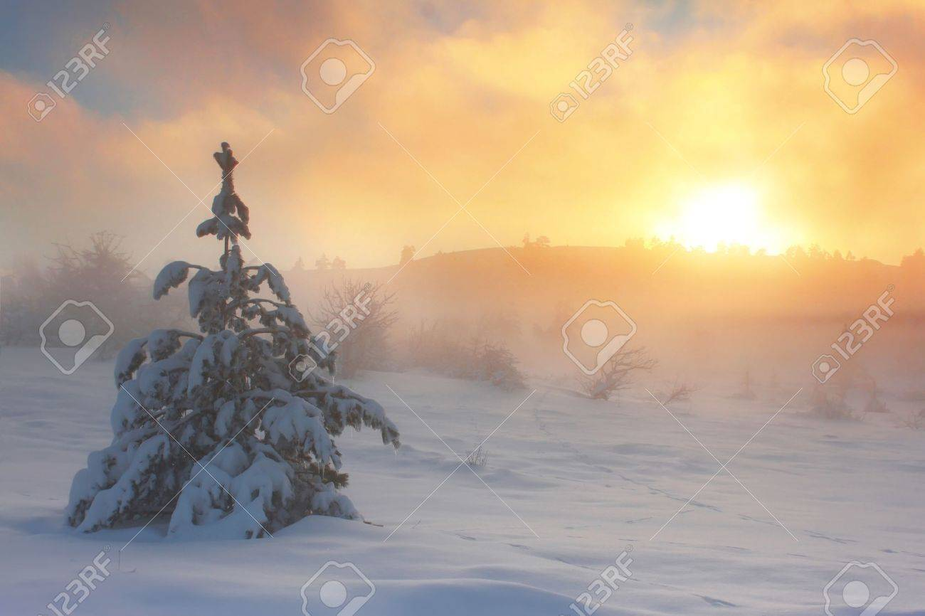 Spruce in the snow against dawn sky in the mountains Stock Photo - 8920173