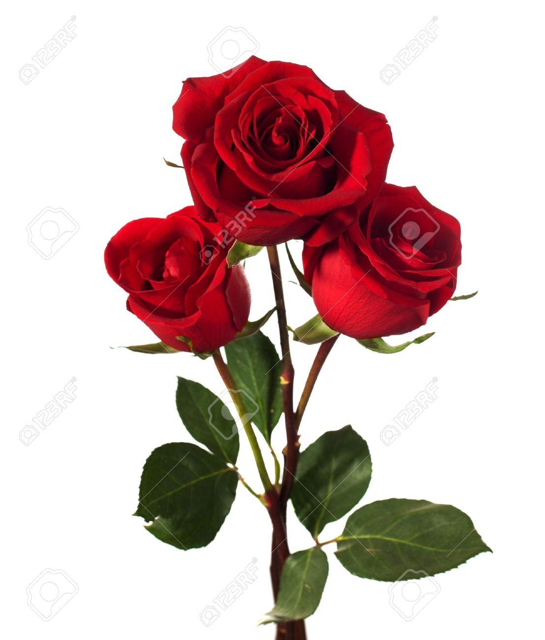 Photo Rose et wallpaper sur Fond Ecran Image
