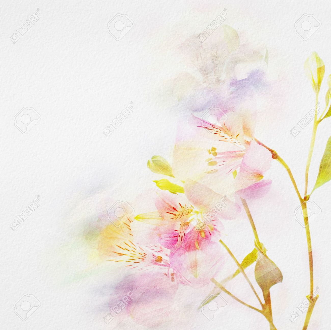 Floral Background With Watercolor Flowers Stock Photo Picture And