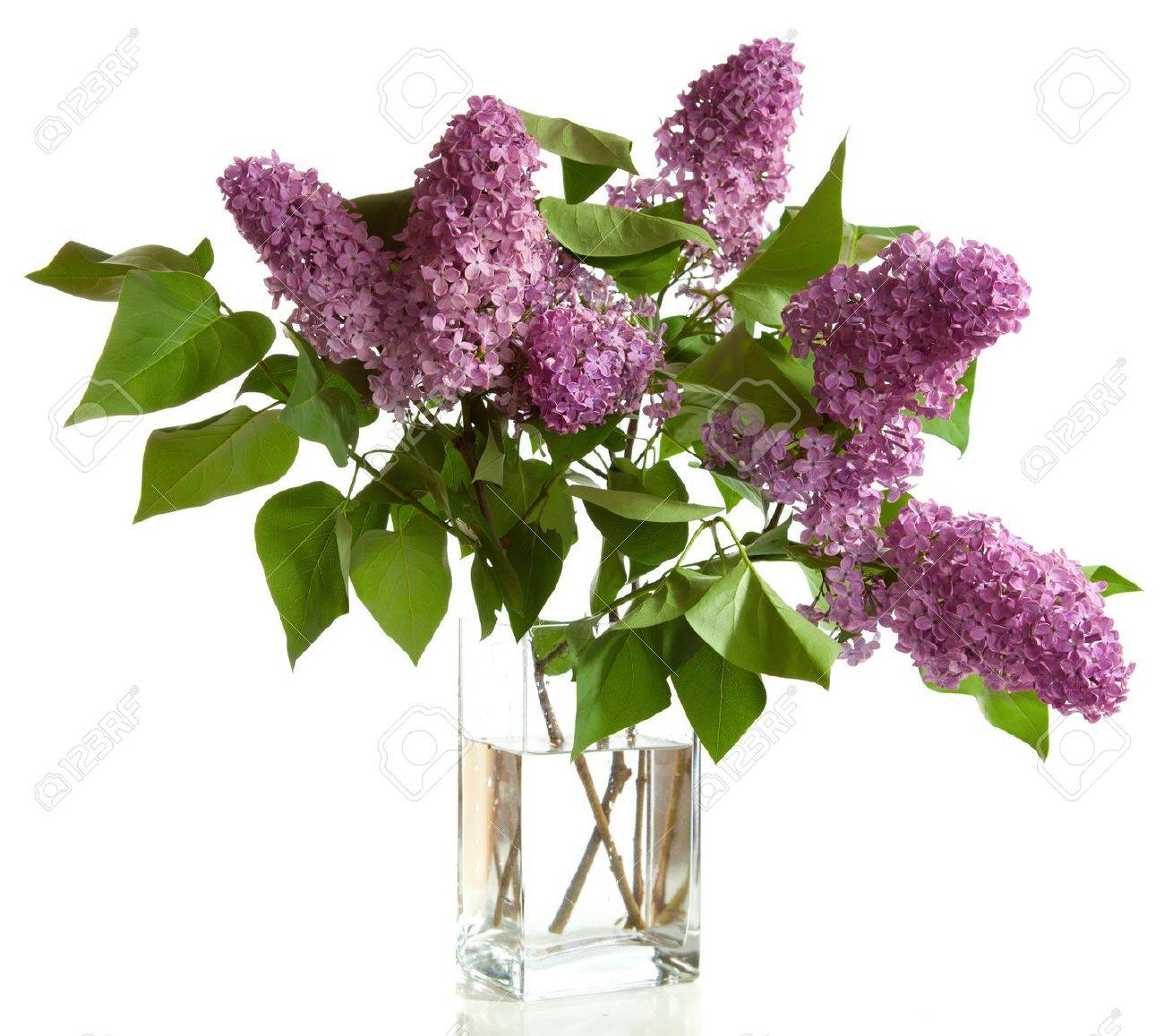 Bouquet of spring purple lilac in a vase isolated on a white bouquet of spring purple lilac in a vase isolated on a white background stock photo reviewsmspy