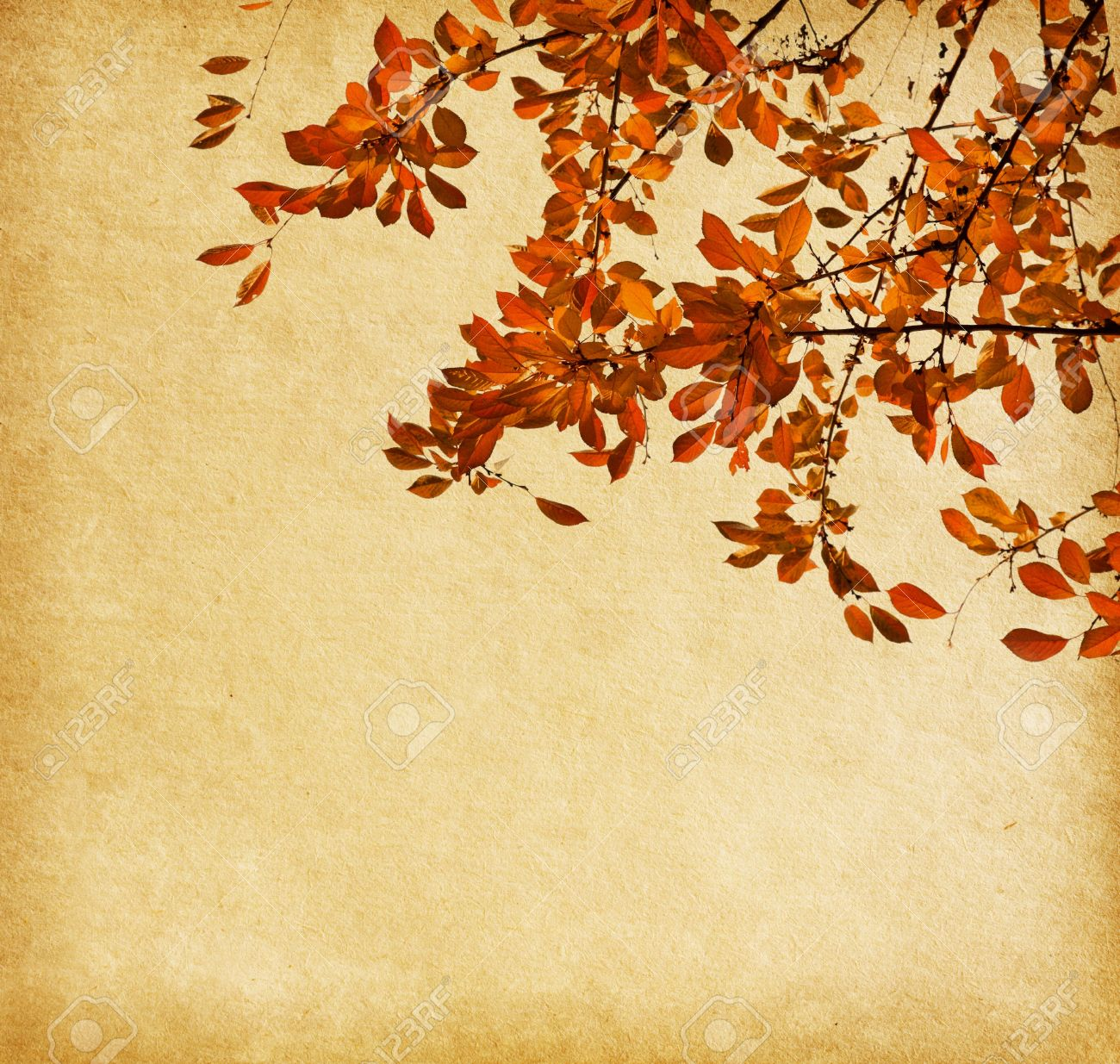 Old paper with branch of autumn leaves  Cherry plum Stock Photo - 14983862