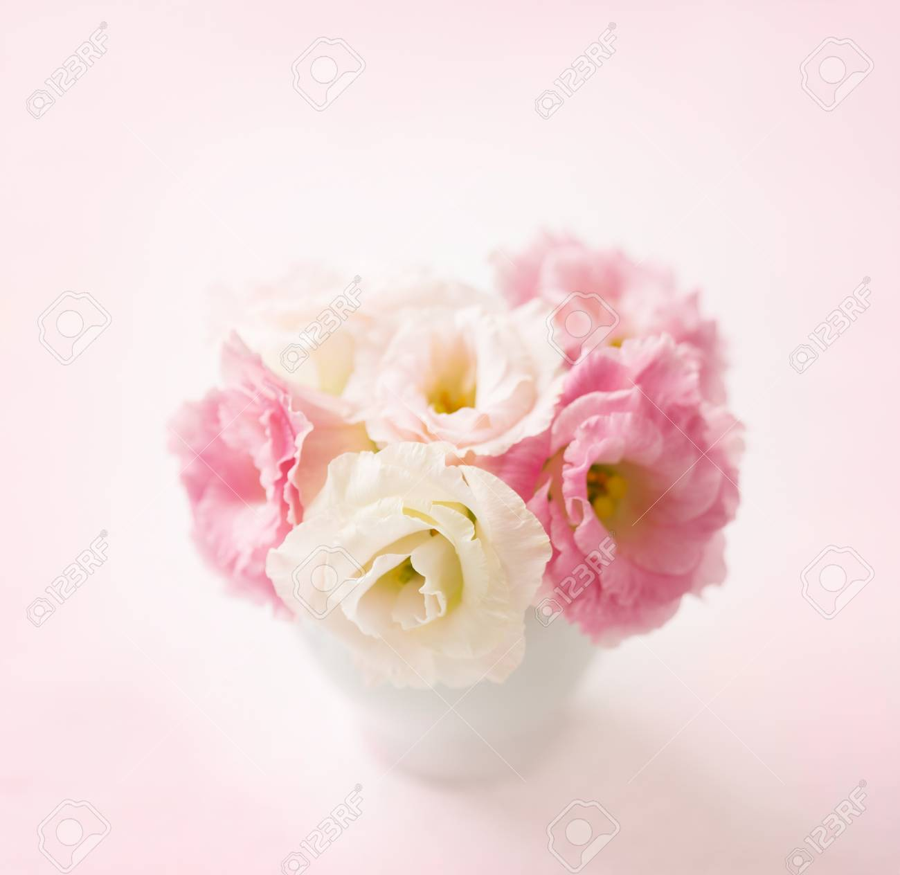 Pink flowers eustoma on pale pink background shallow depth pink flowers eustoma on pale pink background shallow depth of field selective mightylinksfo