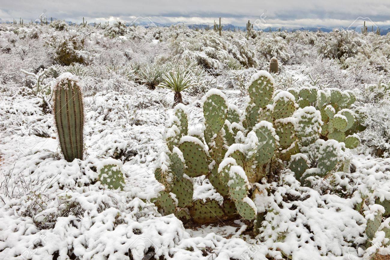 Snow covered Sonoran Desert. Stock Photo - 9044740