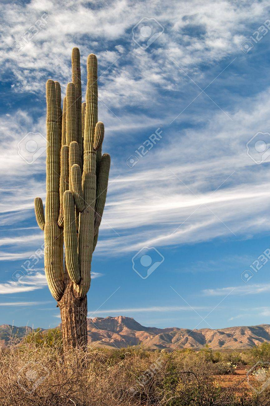 Saguaro and Mazatzal Mountains in Four Peaks Wilderness. Stock Photo - 11723069