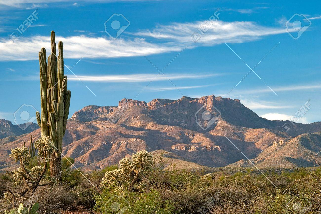 サグアロとソノラ砂漠で Mazatza...