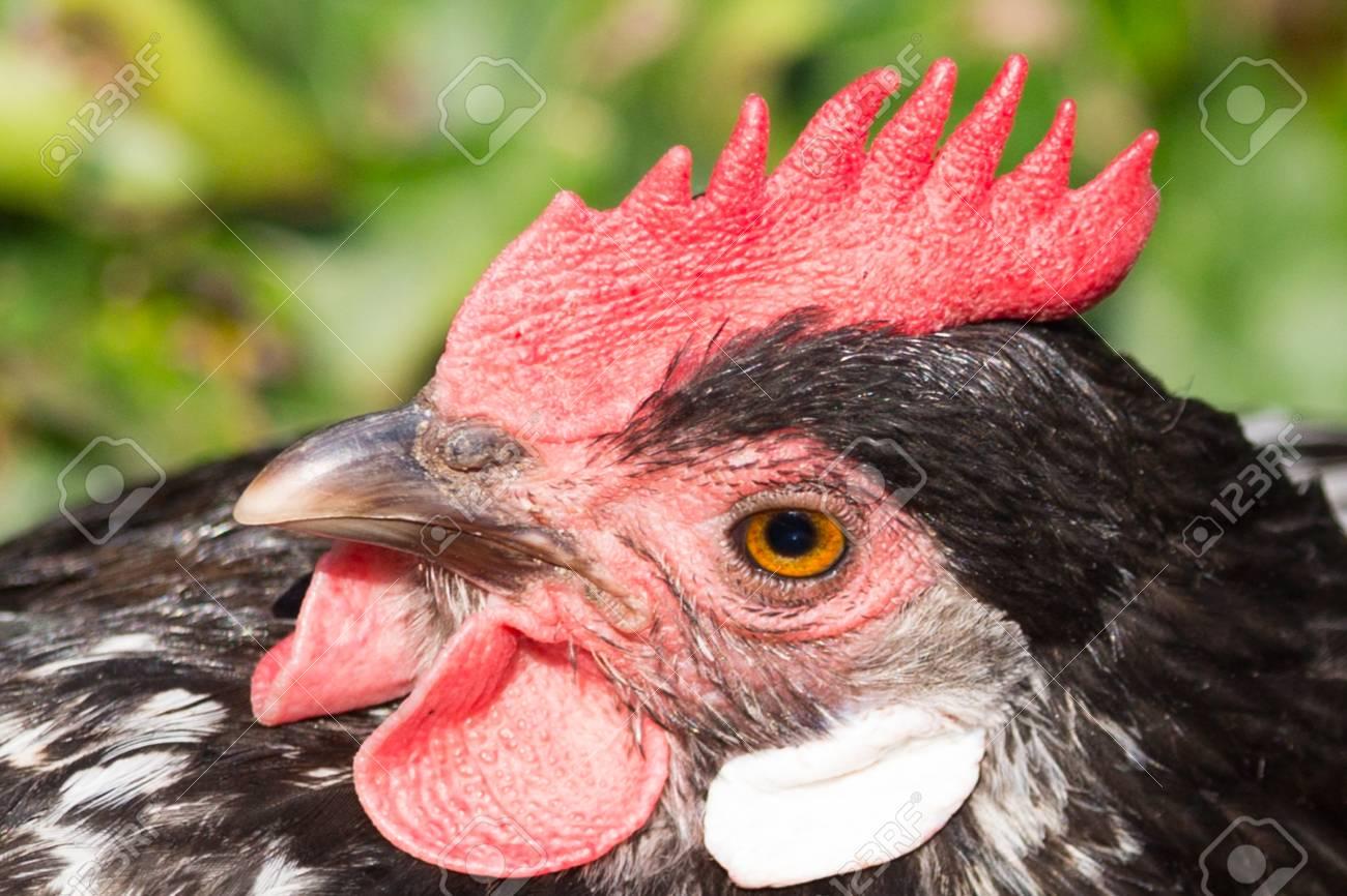 Close up cock pics free