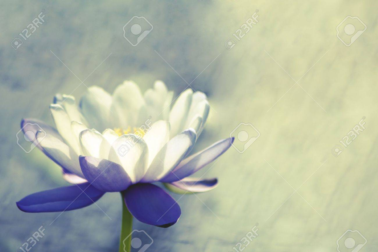 Water lily Stock Photo - 21910402