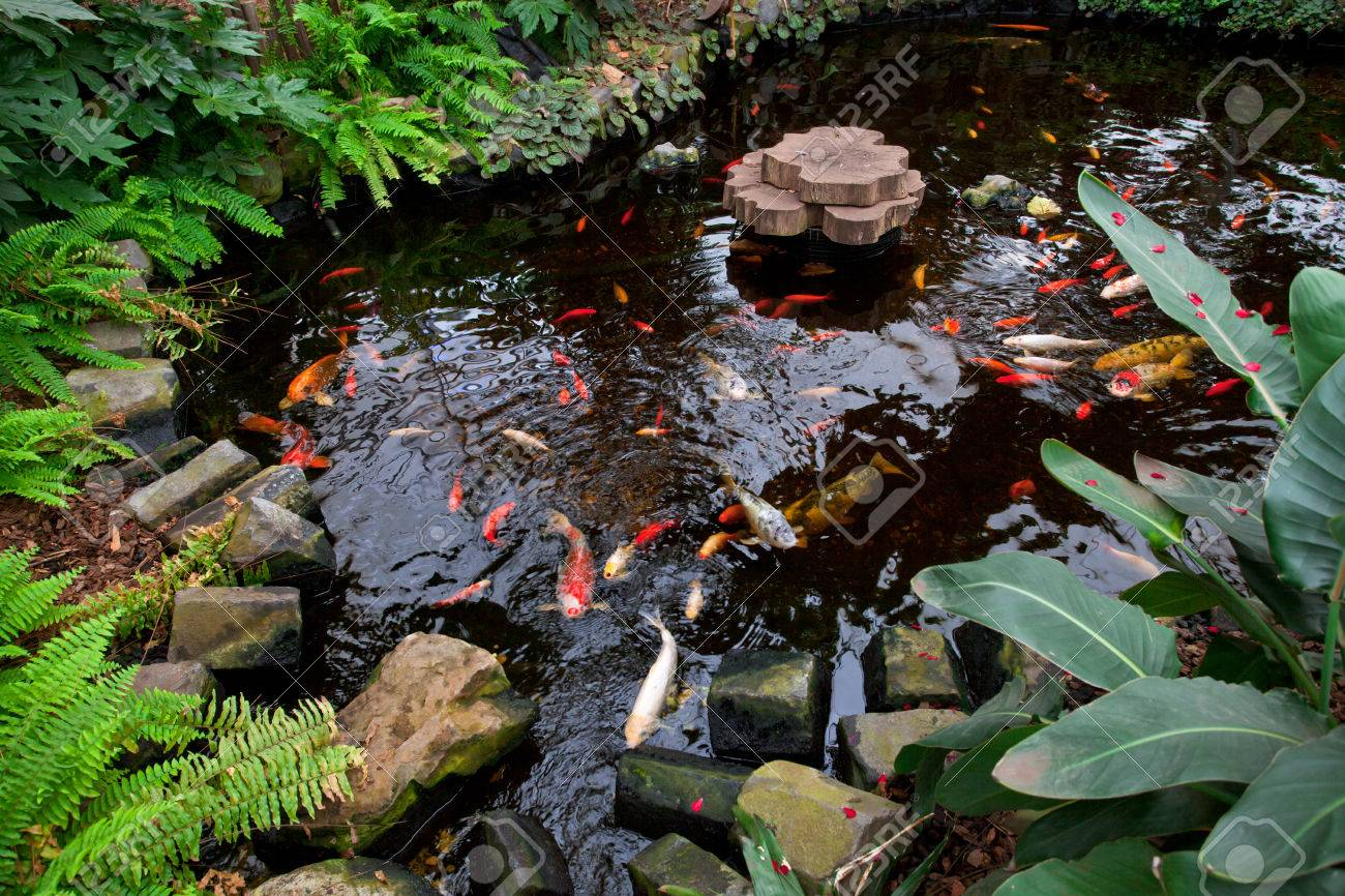 Tropical Garden Landscape With Fish Pond Stock Photo   49206921