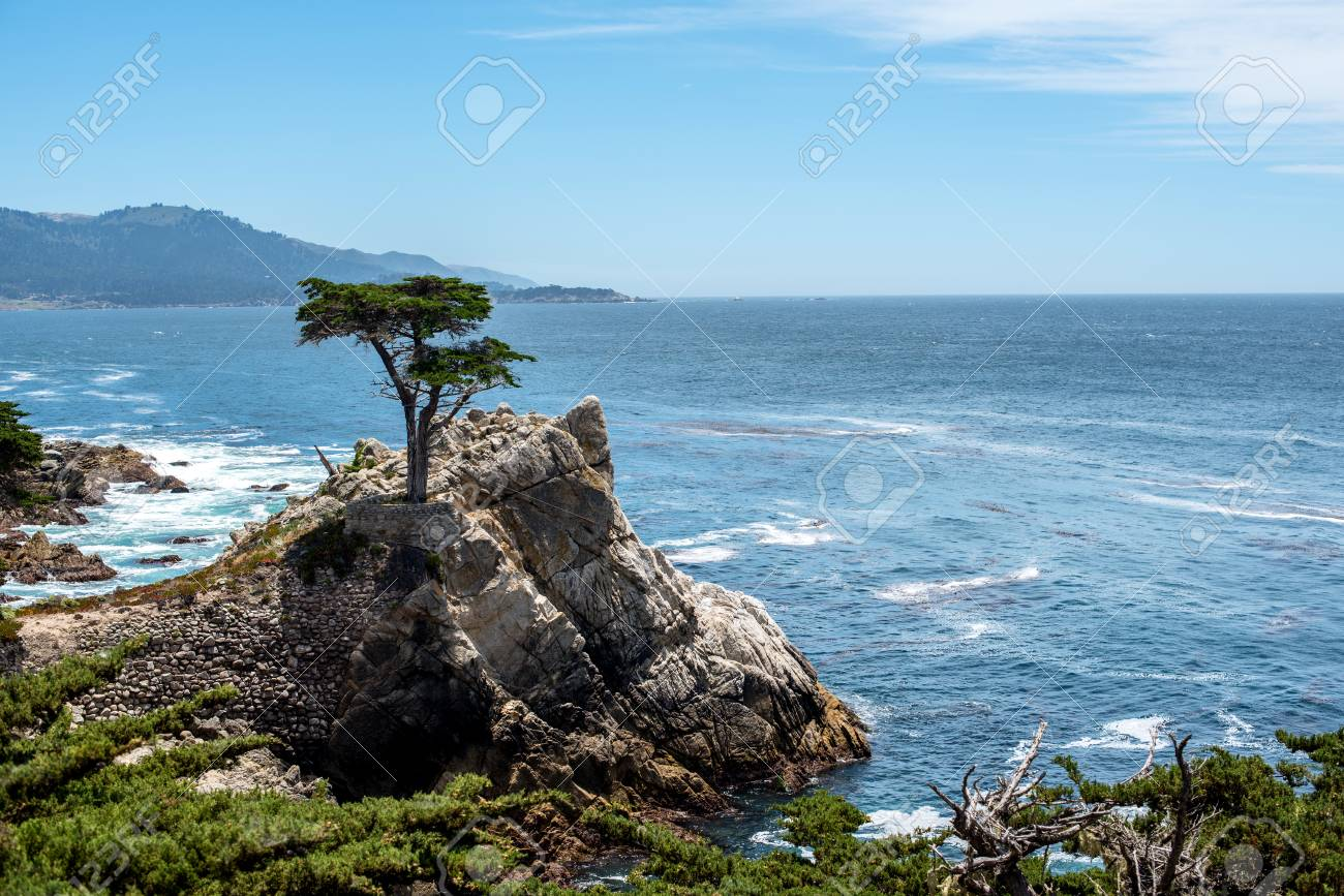 Lone Cypress At 17 Miles Drive Monterey Peninsula California Stock Photo Picture And Royalty Free Image Image 80272363