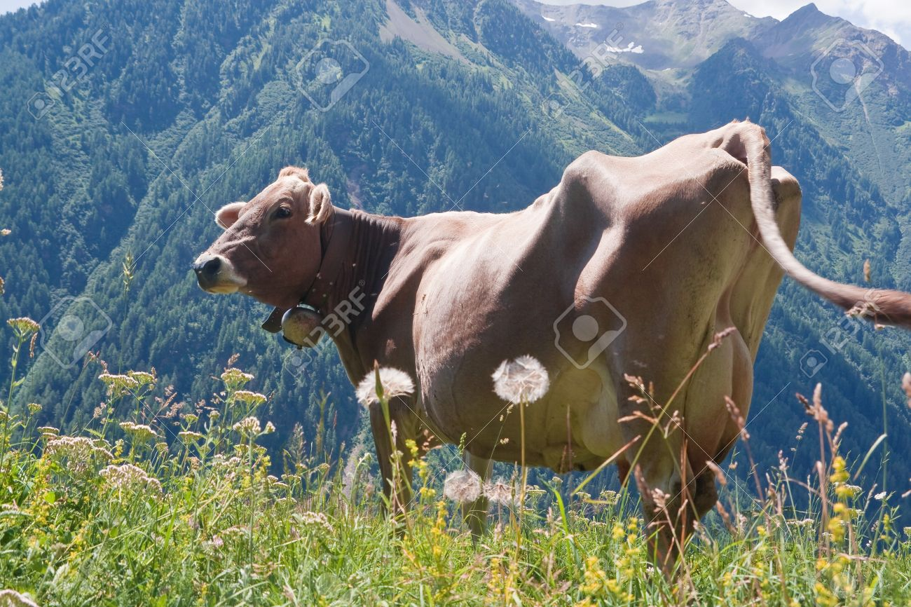 фото красивых коров