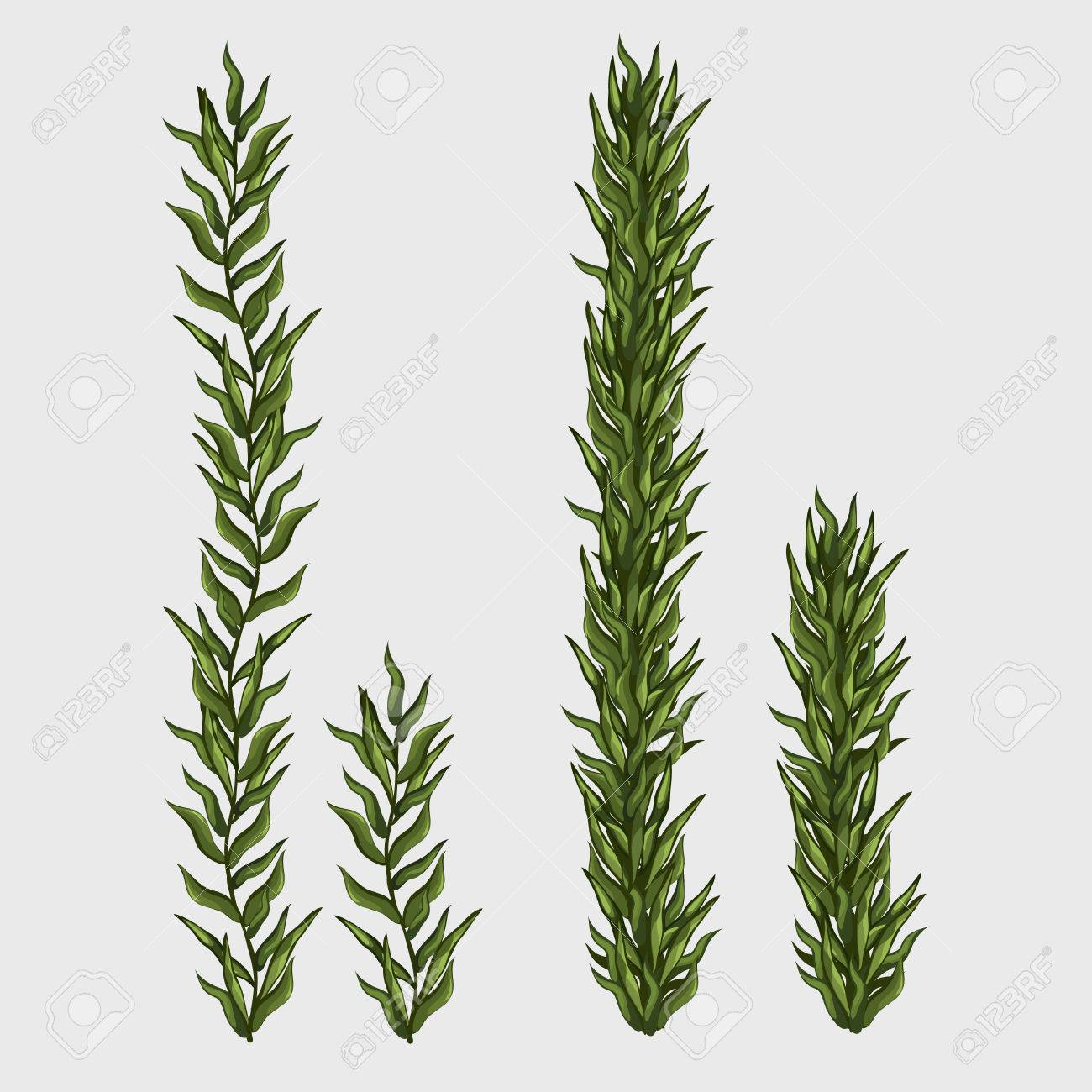 2 つの海藻を古典的な水中草イラストのイラスト素材ベクタ Image