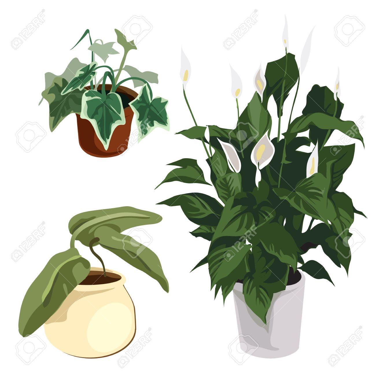 Bloemen In Pot.Calla Lelies En Andere Siergewassen In Pot Vector Bloemen Geisoleerd