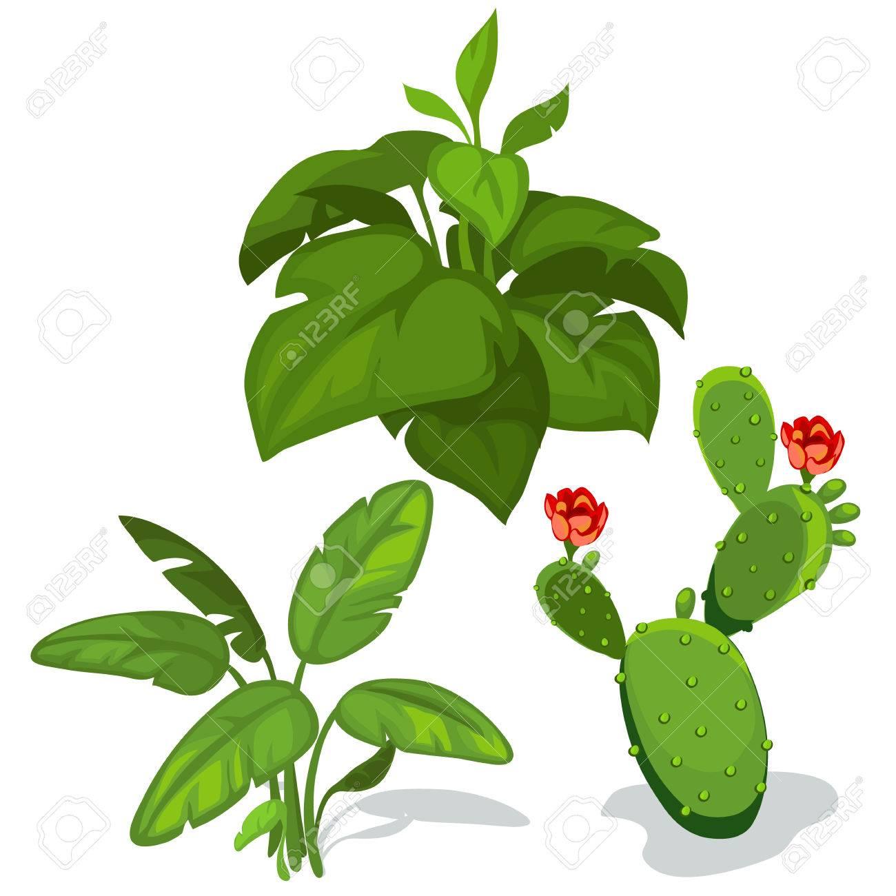 Cactus Con Flores Y Hojas Verdes Grandes. Ilustración Vectorial ...