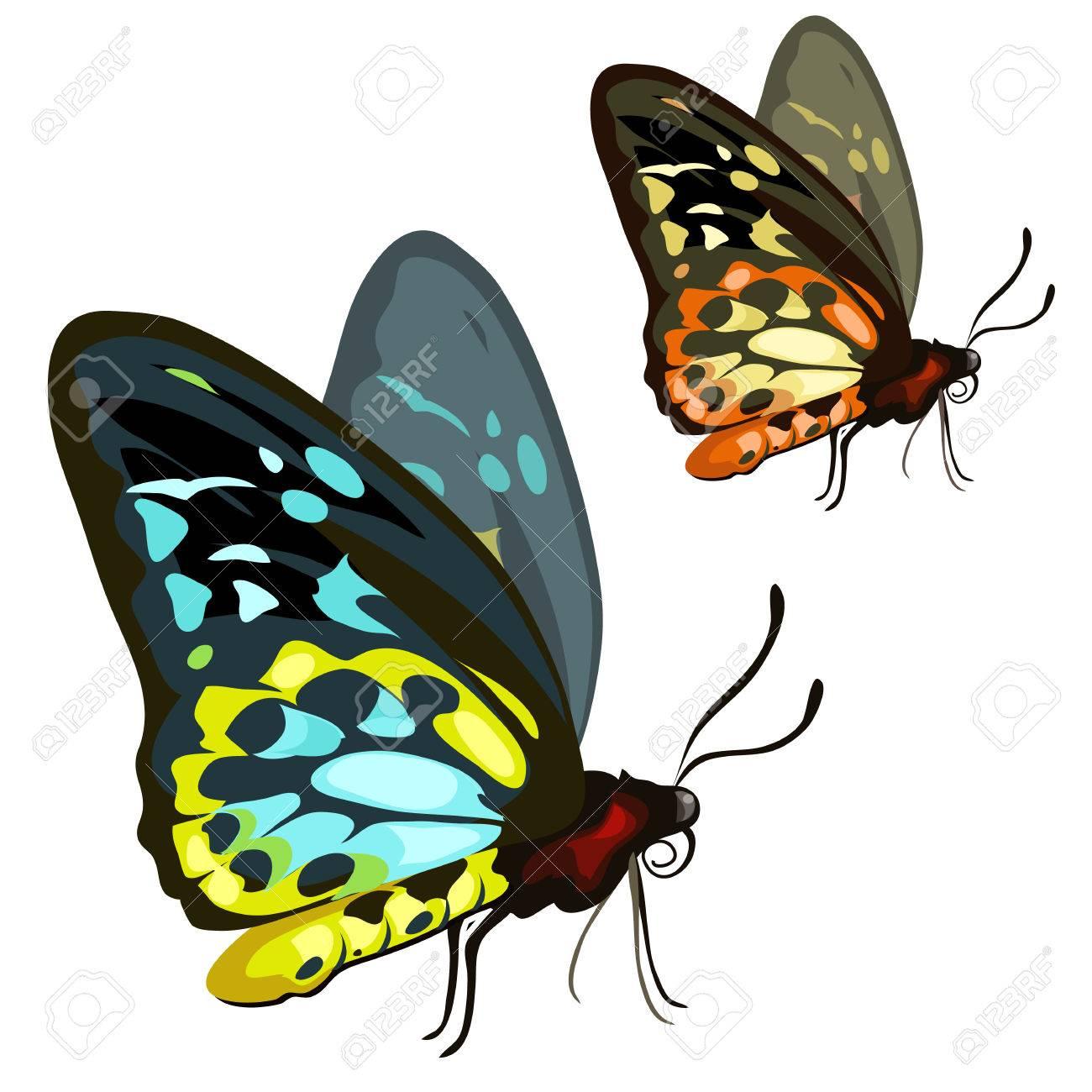 Schöne Farbigen Tropischen Schmetterling Auf Einem Weißen ...