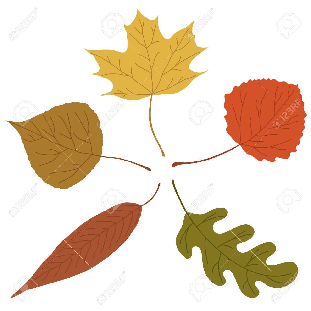 Five autumn leaves on white background. Stock Vector - 7530233