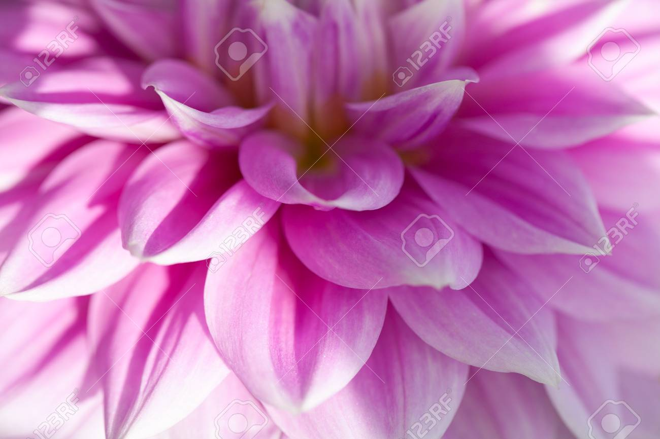 Soft Pink Flower Background Floral Macro Wallpaper Stock Photo