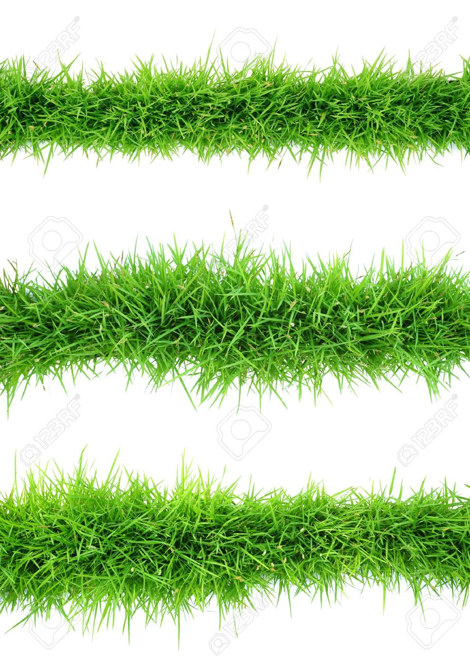 Top view of grass on white background - 20178219