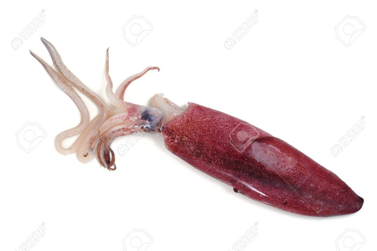 Squid isolated on white - 20377758
