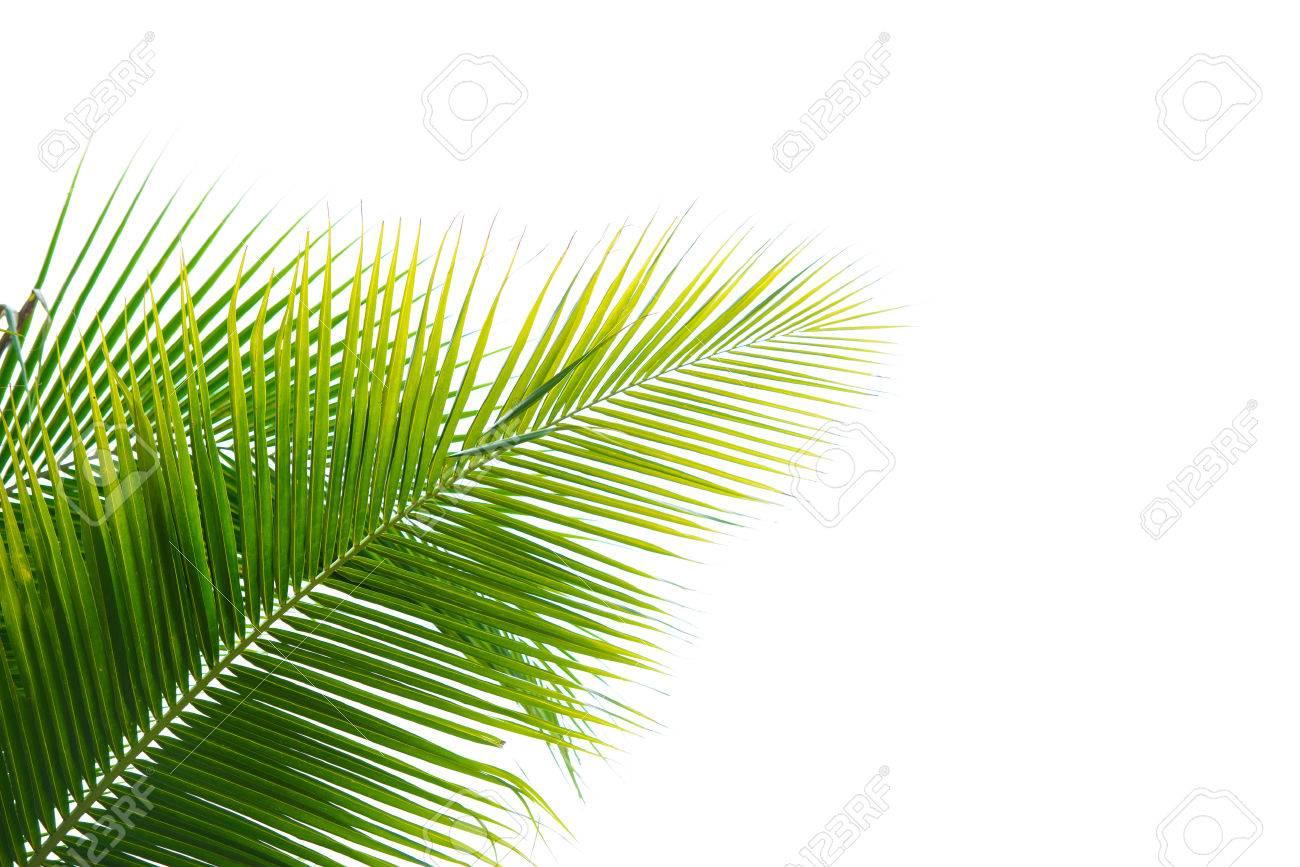 Palm Leaf - 30485609