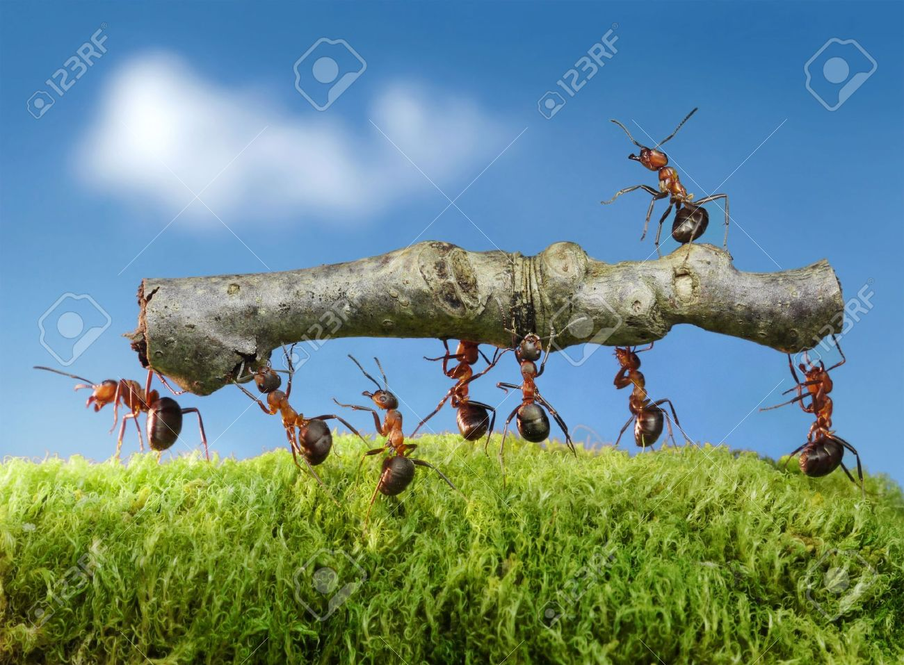Ants Working Stock Photos And Images 123rf