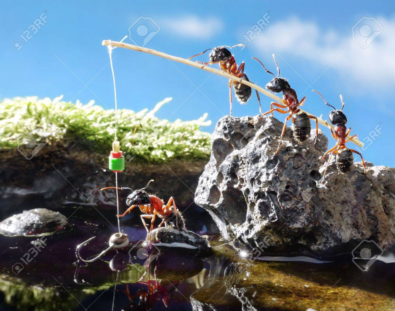 team of ants angling  with rod on sunny day Stock Photo - 7689822