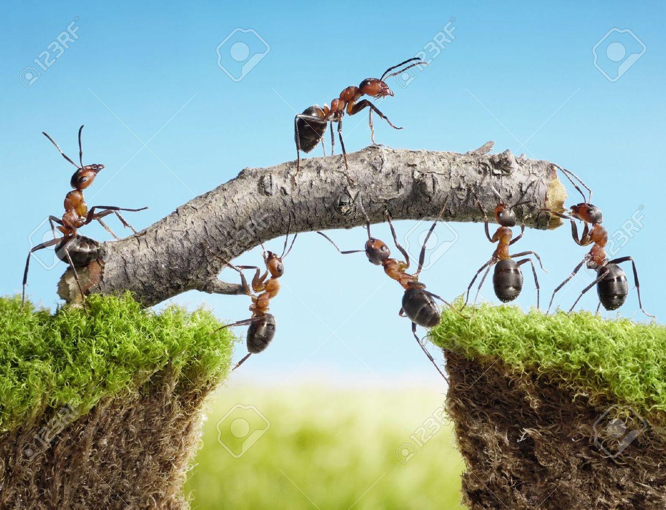 team of ants constructing bridge with log, teamwork - 10355173