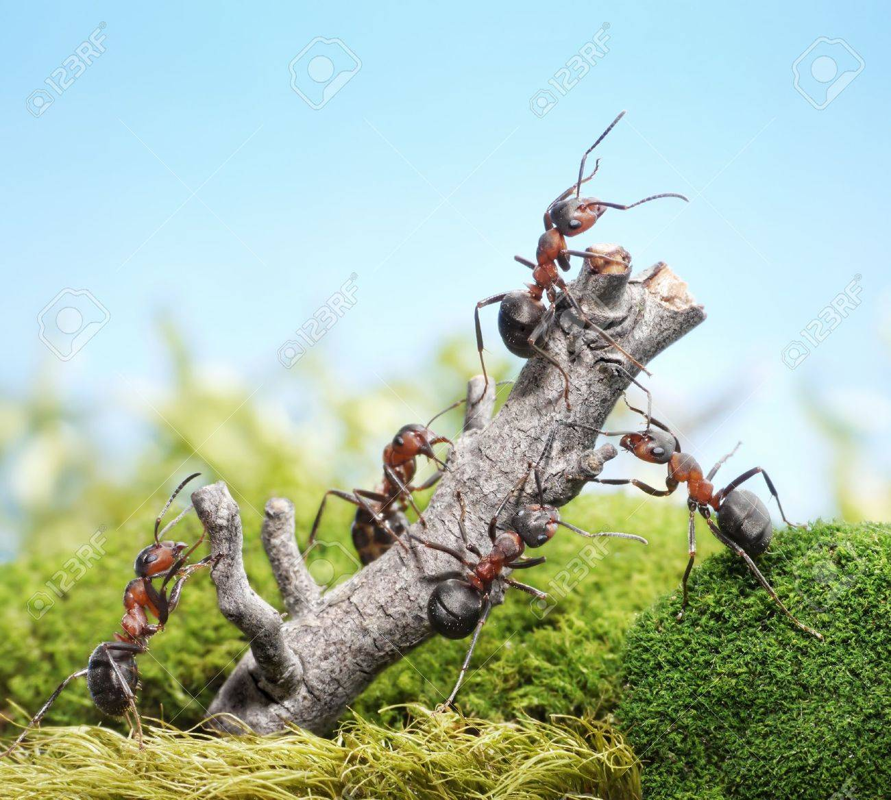 team of ants breaking down weathered tree, teamwork concept Stock Photo - 11111890