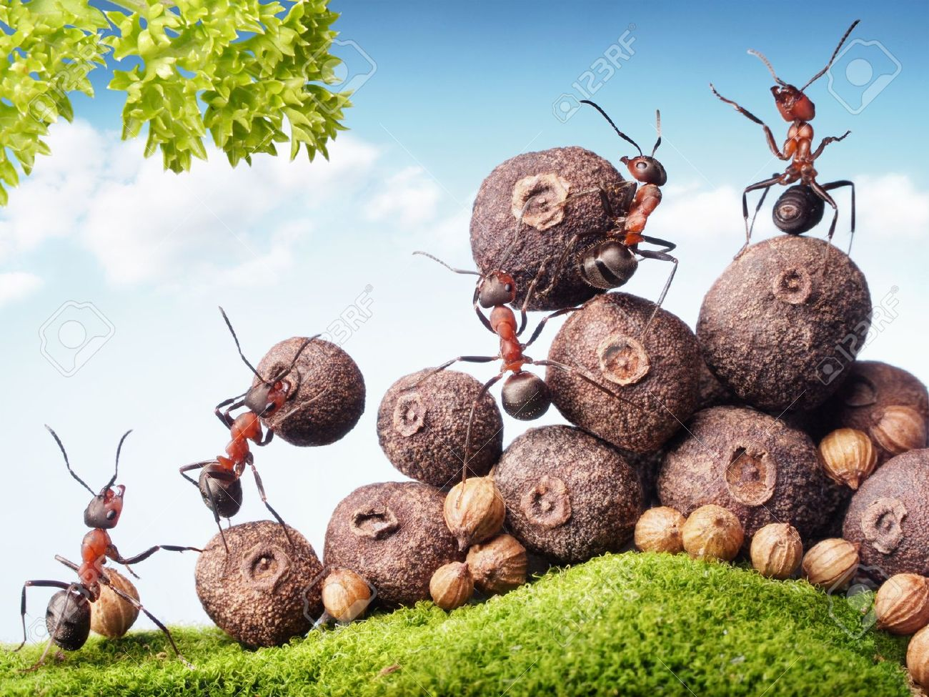 ant images u0026 stock pictures royalty free ant photos and stock