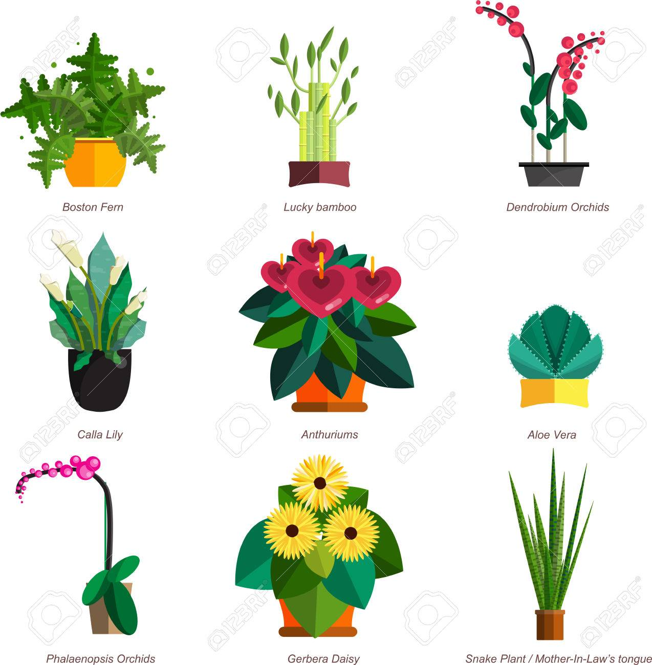 Illustration Von Zimmerpflanzen Innen Und Buropflanzen Im Topf